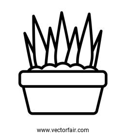 potted house plants , line style icon