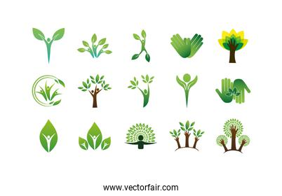 Isolated natural leaves support shapes icon set vector design