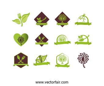 Isolated healthy and organic food icon set vector design