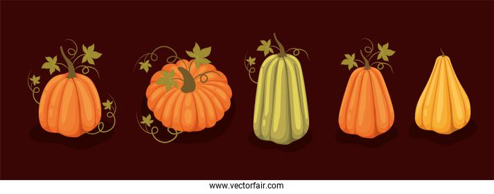 Set of autumn pumpkins with leaves vector design