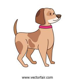 cute dog with collar icon
