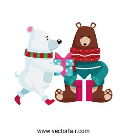 christmas grizzly bears with gift boxes, flat design