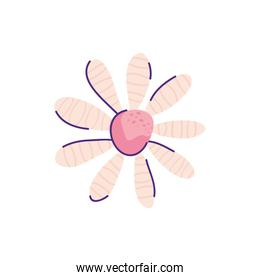 cute daisy flower nature isolated icon