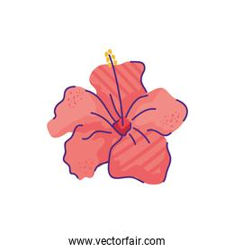 cute hibiscus flower nature isolated icon