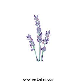 cute lavender flower nature isolated icon
