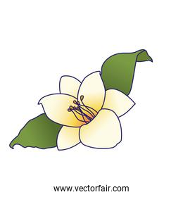 beautiful flower and leaves icon, colorful design