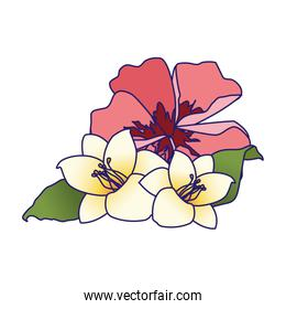 beautiful tropical flowers icon, colorful design