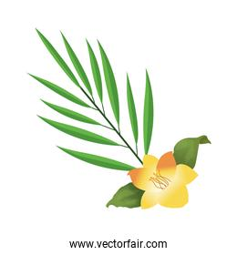 yellow flower and tropical leaf icon