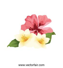 beautiful tropical flowers icon