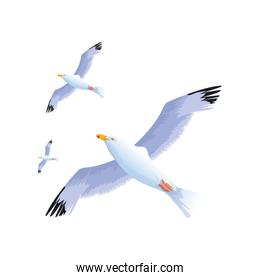 gulls flying icon, colorful design