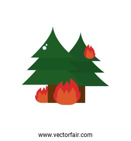 pine trees in fire flat style icon vector design