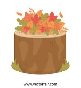 autumn trunk foliage leaves on top