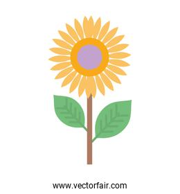 sunflower nature delicate decoration icon