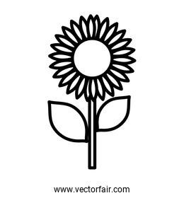 sunflower nature delicate decoration icon thick line