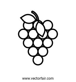 bunch grapes fresh fruit harvest design icon thick line