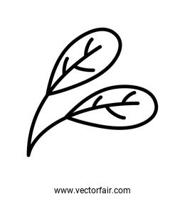 foliage leaves branch botanical design thick line