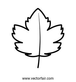 autumn maple leaf nature foliage on white background thick line