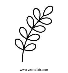 branch leaves foliage autumn on white background thick line