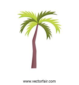 tropical palm tree over white
