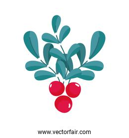 leaves foliage berries seeds nature icon