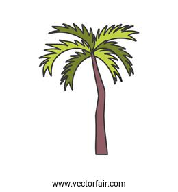 tropical palm tree on white background