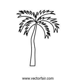 tropical palm tree on white background thick line