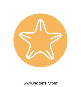 Isolated sea star line block style icon
