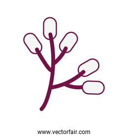branch with seeds purple lines  style icon
