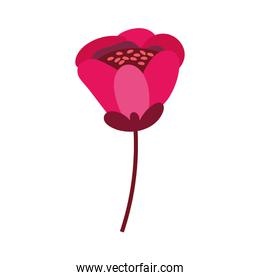 beautiful flower desing isolated icon