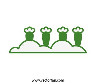 green carrots vegetables cultivating isolated icon