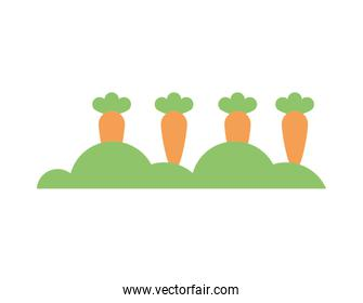 carrots vegetables cultivating isolated icon