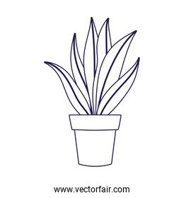 potted plant foliage leaves decoration on white background