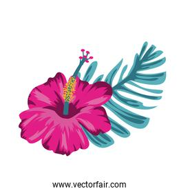 beautiful and tropical flower with leaf plant