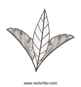 tropical leafs palms natural icons