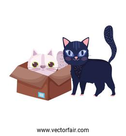 black cat and white cat in box cartoon pets