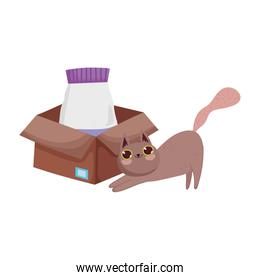 brown cat with food package in cardboard box pets