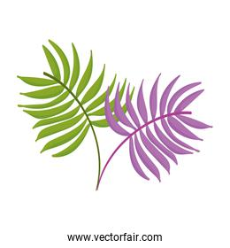 branches foliage leaves nature design icon on white background
