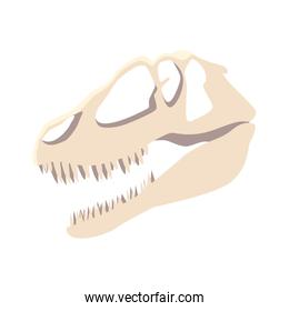 dinosaur skull on white background