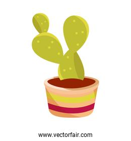 cinco de mayo potted succulent decoration