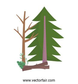 pine tree wood trunk nature isolated icon design