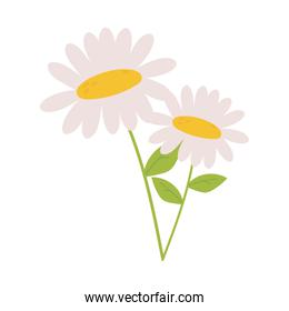 daisy flowers petals stem leaf nature decoration icon