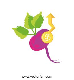 beets with price symbol on white background