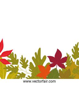 Isolated autumn leaves vector design