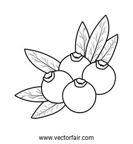 Isolated blueberry fruit vector design
