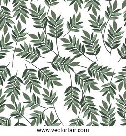Isolated leaves background vector design