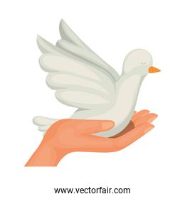 Isolated dove bird vector design