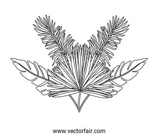 Isolated tropical leaves vector design
