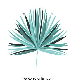 Isolated tropical green leaf vector design