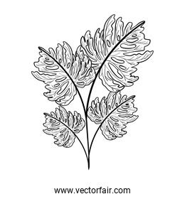 Isolated tropical leaf vector design