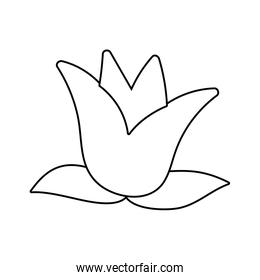 Isolated flower ornament with leaves vector design